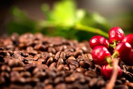 89193131-café-planta-de-café-real-sobre-fondo-de-café-tostado-diseño-de-arte-fronterizo